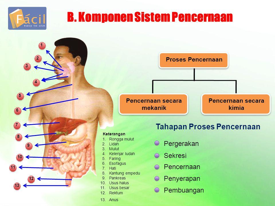 B. Komponen Sistem Pencernaan