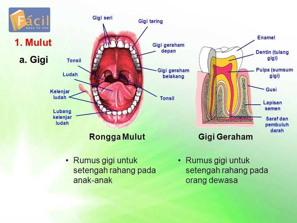 1. Mulut a. Gigi Rongga Mulut Gigi Geraham