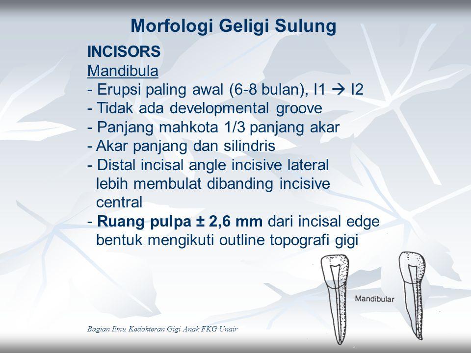 Morfologi Geligi Sulung