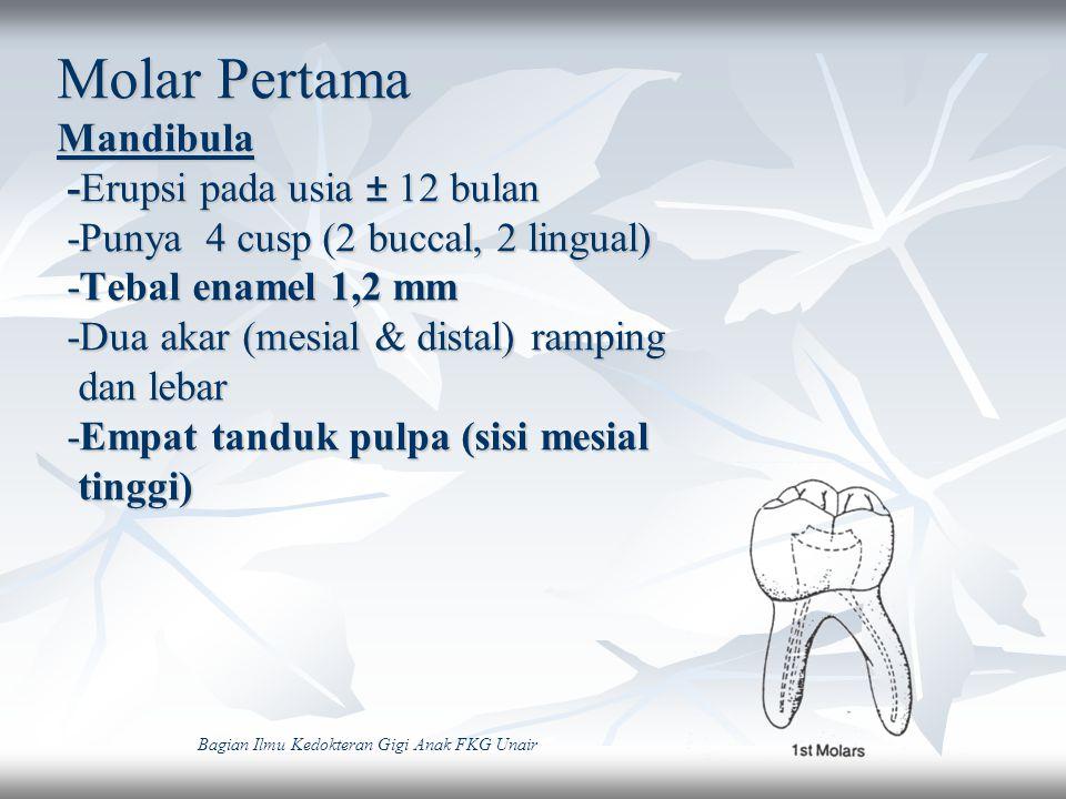 Molar Pertama Mandibula -Erupsi pada usia ± 12 bulan -Punya 4 cusp (2 buccal, 2 lingual) -Tebal enamel 1,2 mm -Dua akar (mesial & distal) ramping dan lebar -Empat tanduk pulpa (sisi mesial tinggi)
