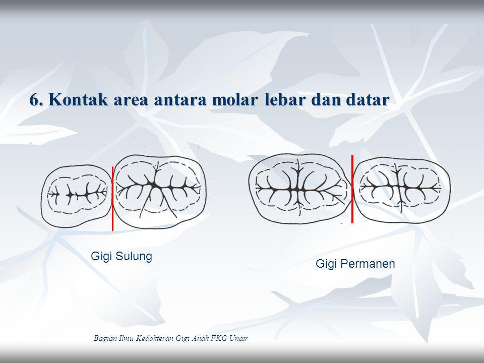6. Kontak area antara molar lebar dan datar