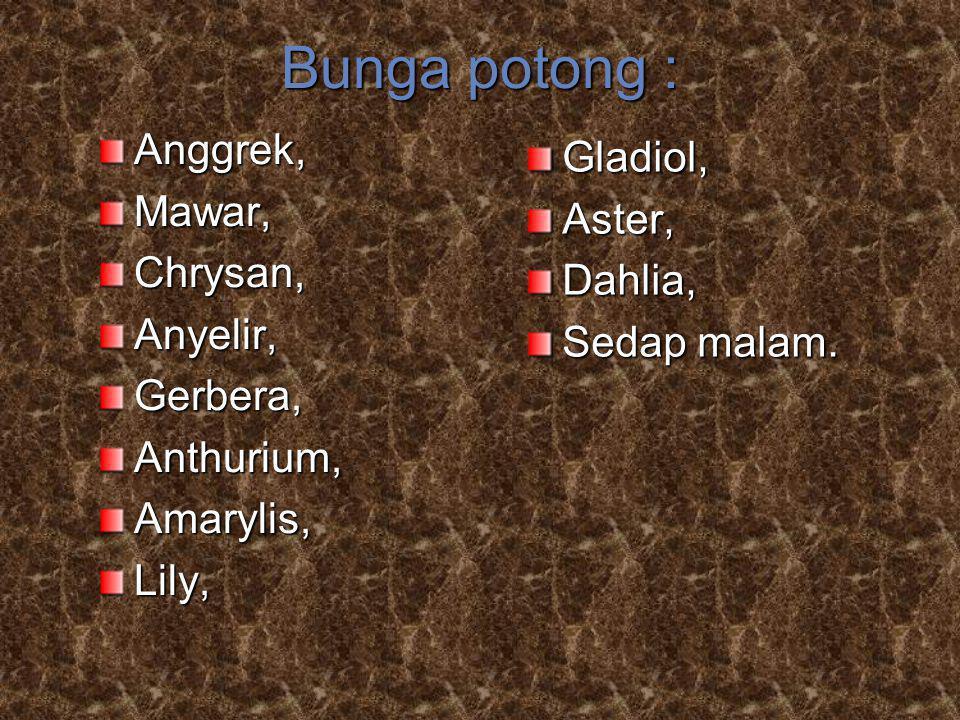 Bunga potong : Anggrek, Gladiol, Mawar, Aster, Chrysan, Dahlia,