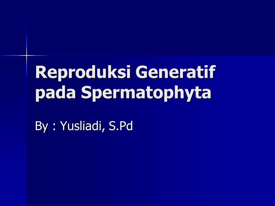 Reproduksi Generatif pada Spermatophyta