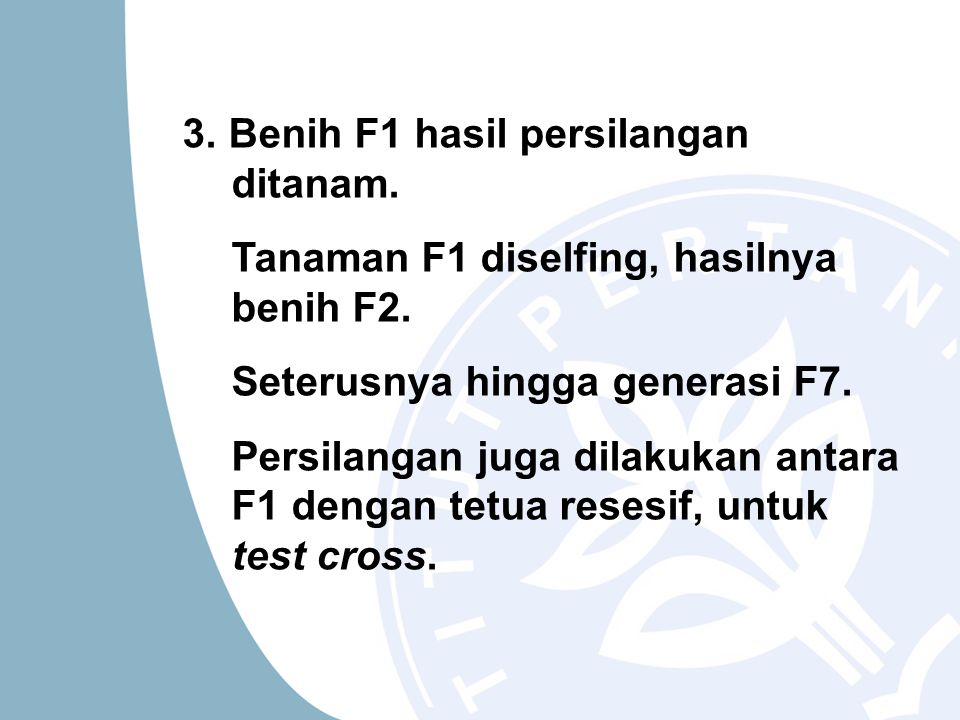 3. Benih F1 hasil persilangan ditanam.