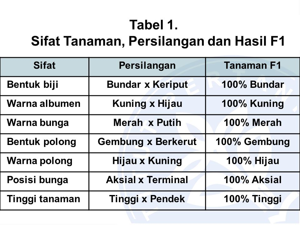 Tabel 1. Sifat Tanaman, Persilangan dan Hasil F1
