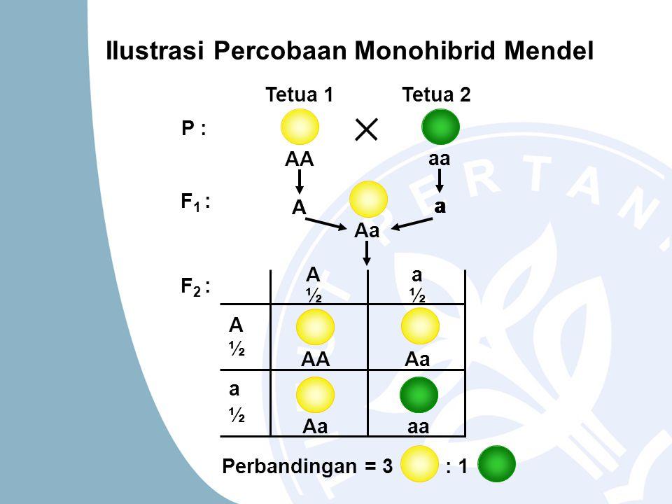 Ilustrasi Percobaan Monohibrid Mendel