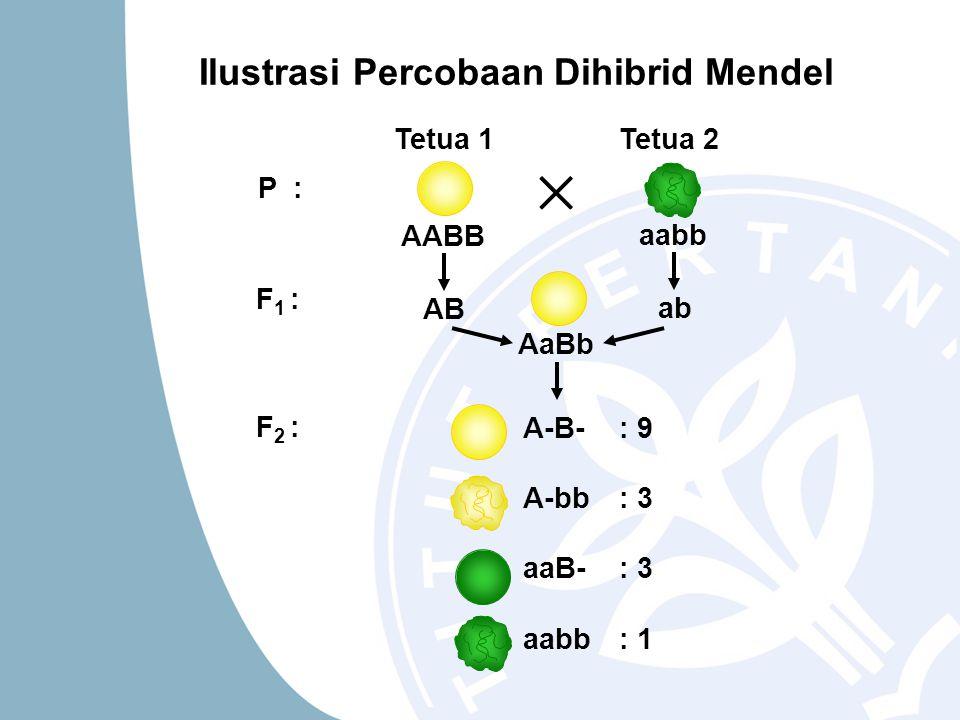 Ilustrasi Percobaan Dihibrid Mendel