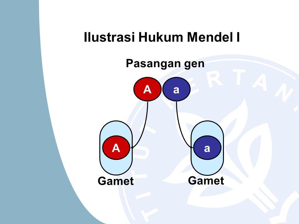 Ilustrasi Hukum Mendel I