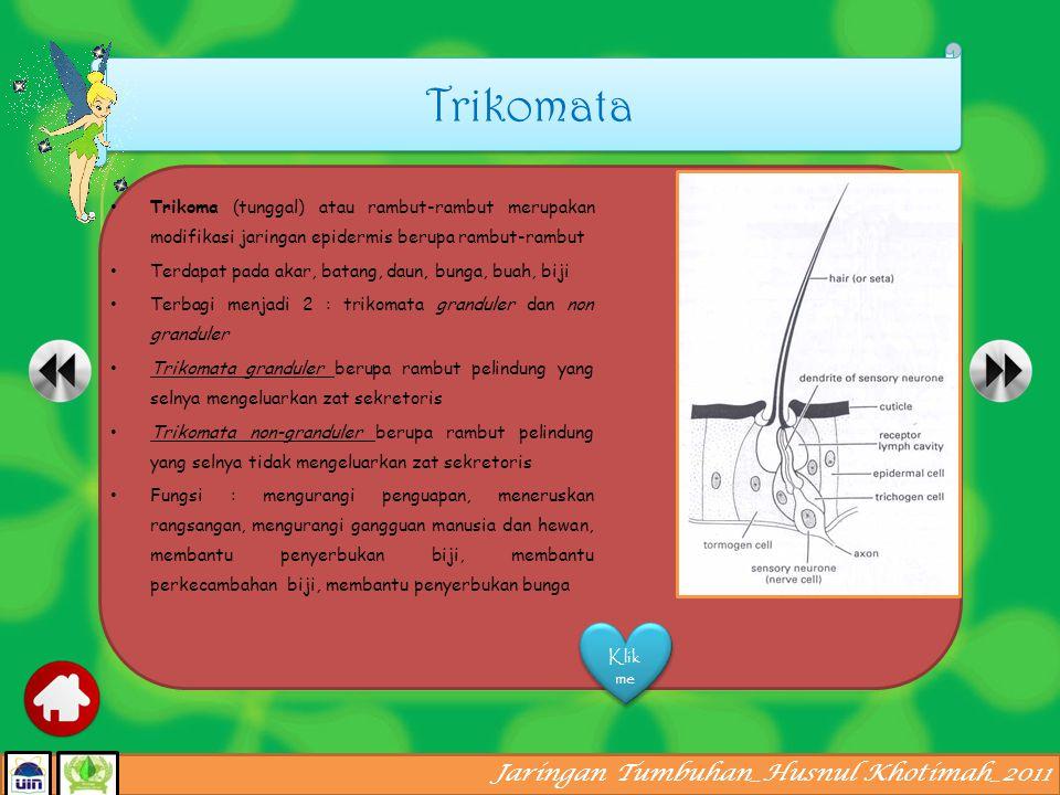 Trikomata Trikoma (tunggal) atau rambut-rambut merupakan modifikasi jaringan epidermis berupa rambut-rambut.