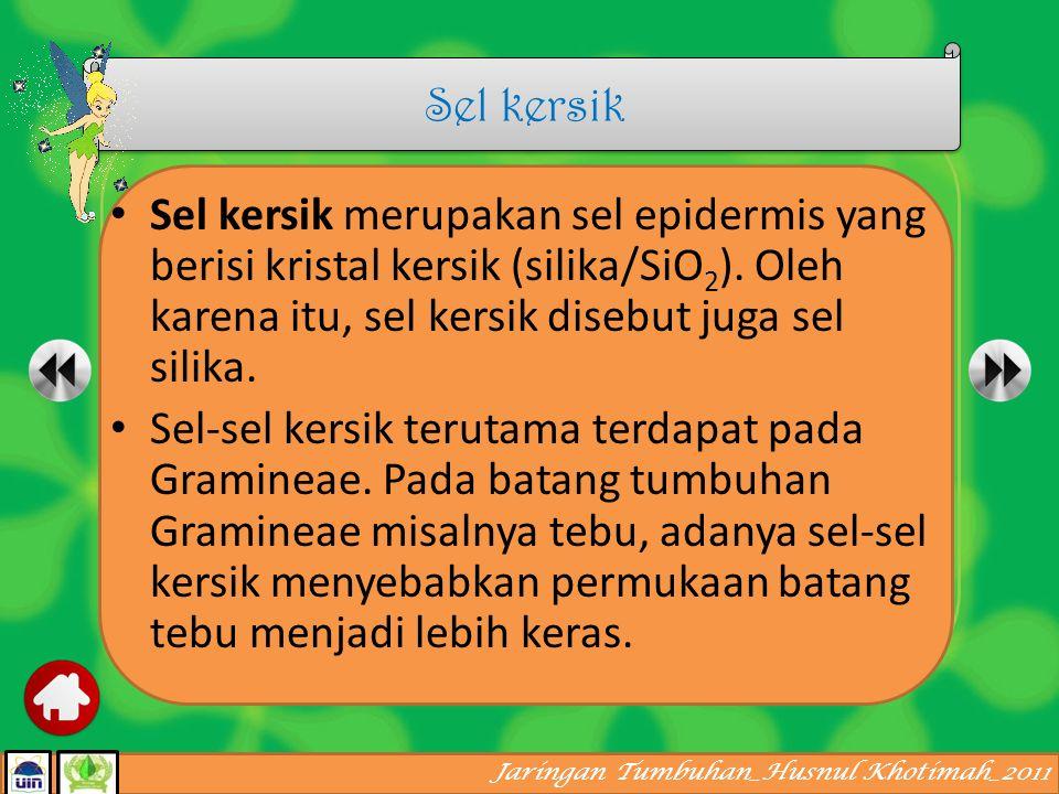 Sel kersik Sel kersik merupakan sel epidermis yang berisi kristal kersik (silika/SiO2). Oleh karena itu, sel kersik disebut juga sel silika.