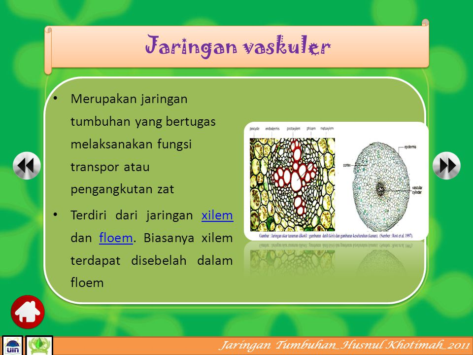 Jaringan vaskuler Merupakan jaringan tumbuhan yang bertugas melaksanakan fungsi transpor atau pengangkutan zat.