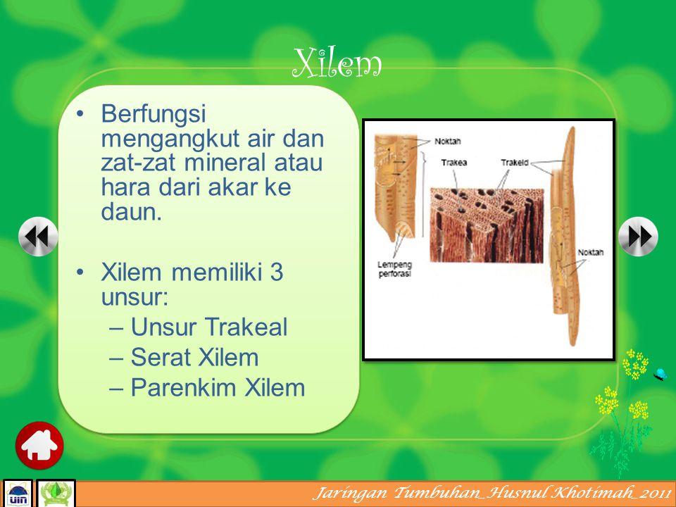 Xilem Berfungsi mengangkut air dan zat-zat mineral atau hara dari akar ke daun. Xilem memiliki 3 unsur: