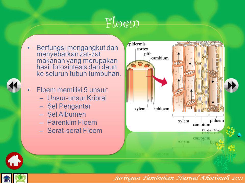 Floem Berfungsi mengangkut dan menyebarkan zat-zat makanan yang merupakan hasil fotosintesis dari daun ke seluruh tubuh tumbuhan.