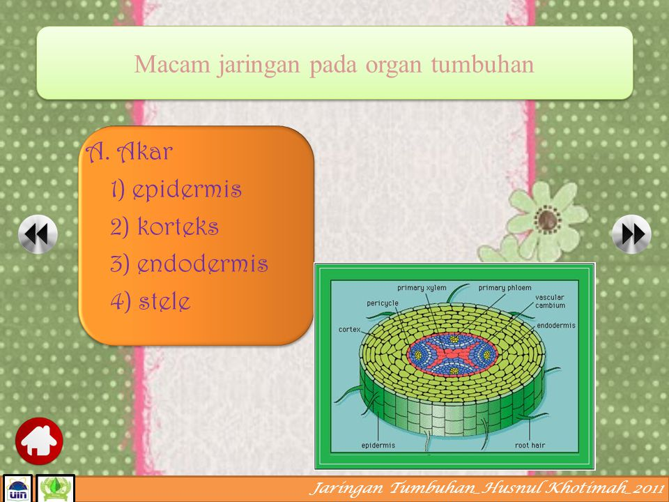 Macam jaringan pada organ tumbuhan