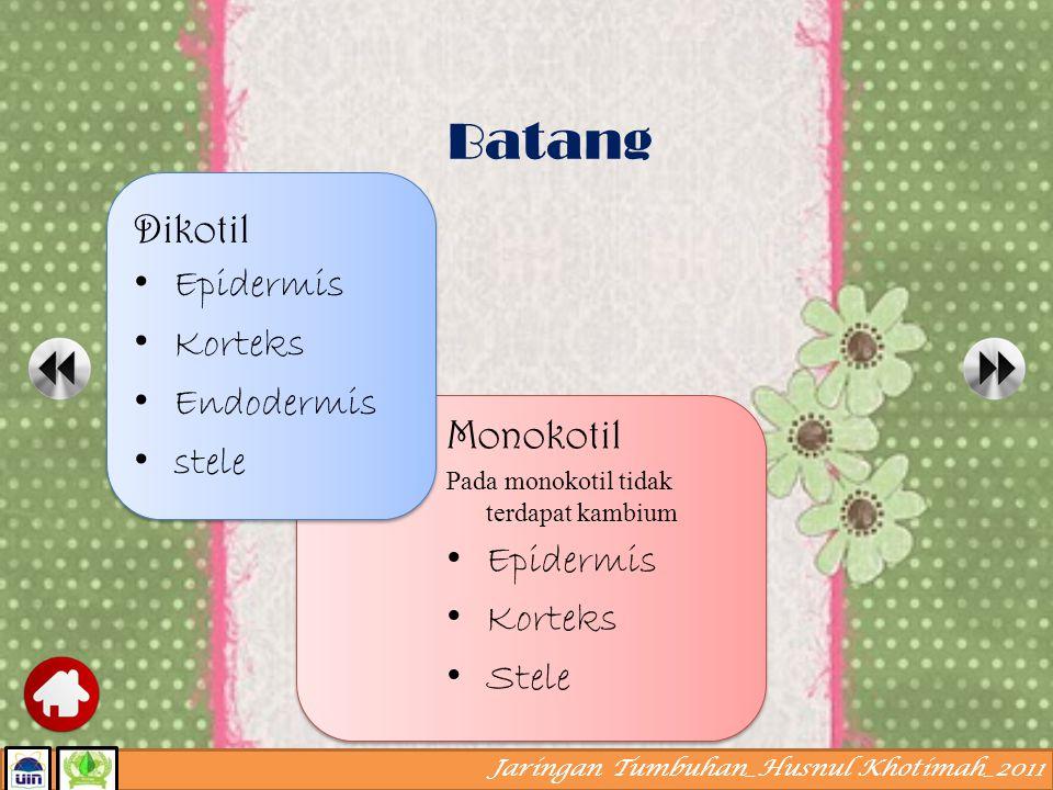 Batang Dikotil Epidermis Korteks Endodermis stele Monokotil Epidermis