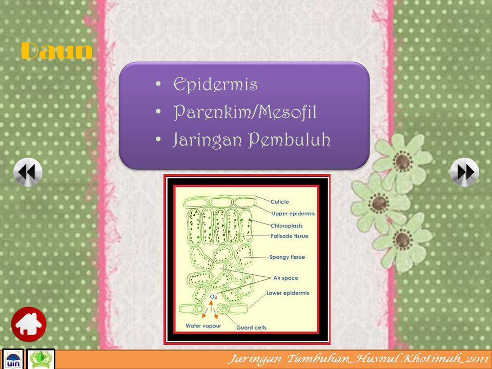 Daun Epidermis Parenkim/Mesofil Jaringan Pembuluh