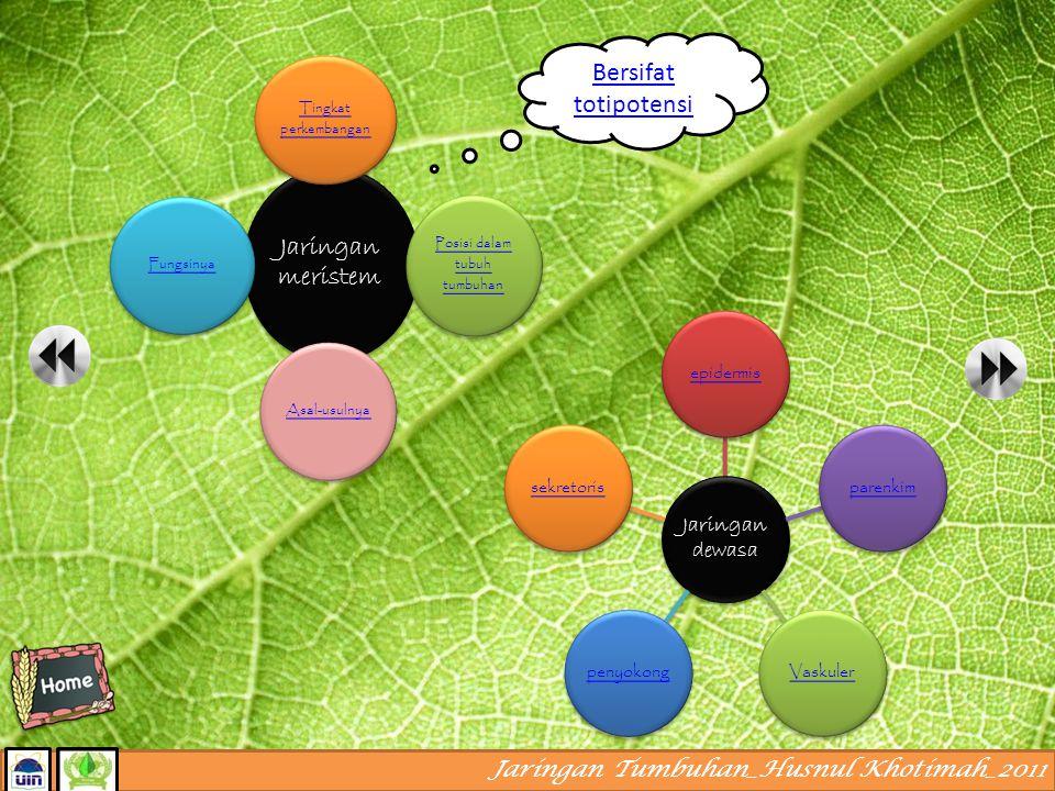 Posisi dalam tubuh tumbuhan