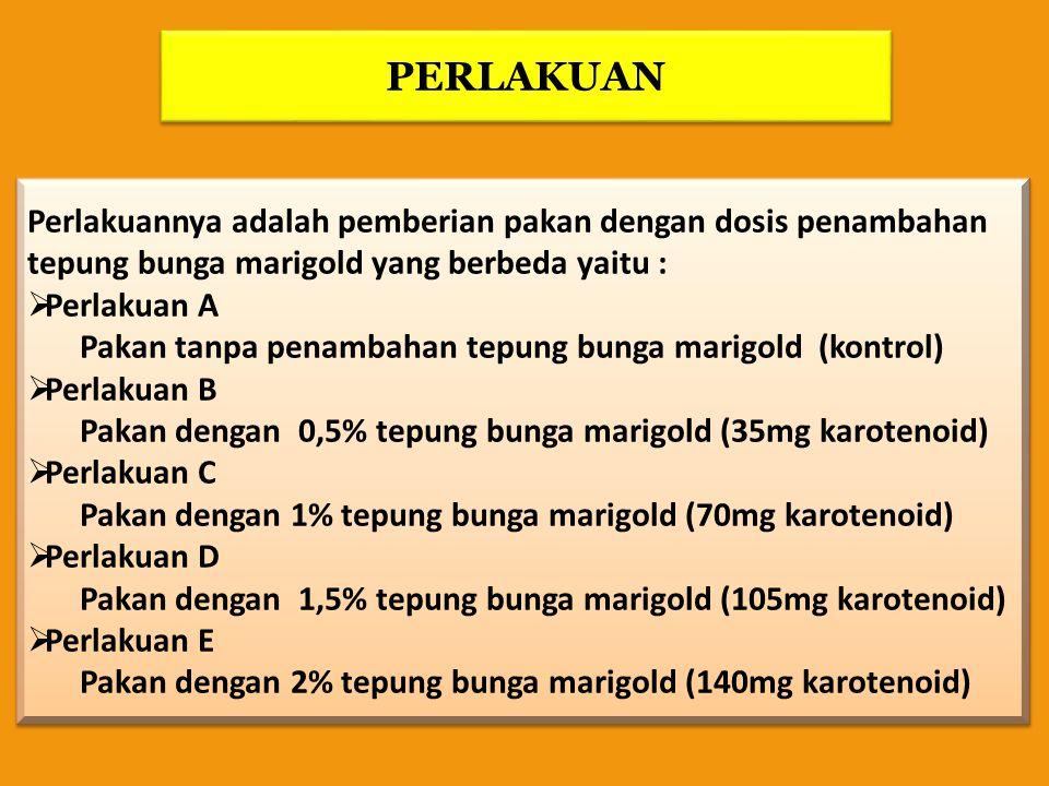 PERLAKUAN Perlakuannya adalah pemberian pakan dengan dosis penambahan tepung bunga marigold yang berbeda yaitu :