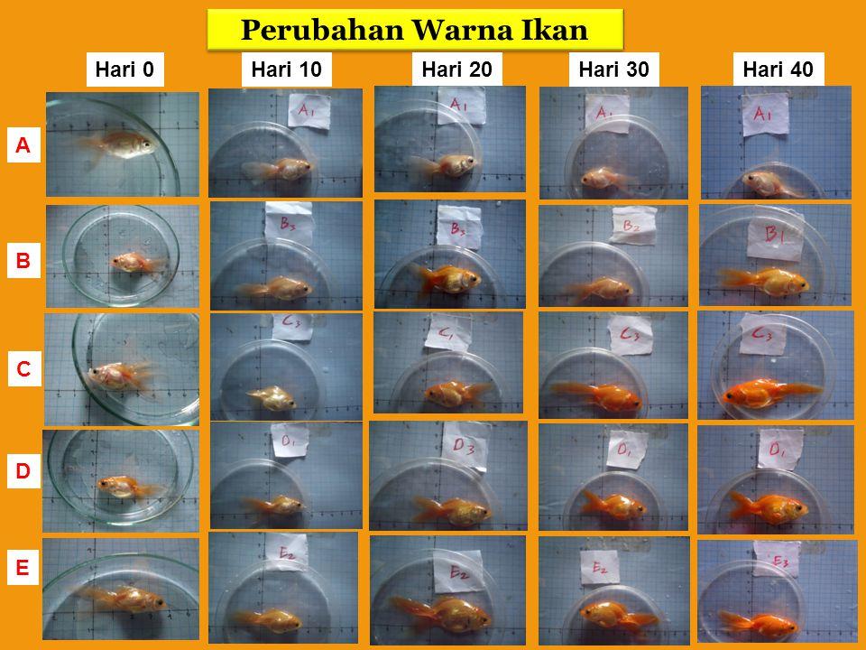 Perubahan Warna Ikan Hari 0 Hari 10 Hari 20 Hari 30 Hari 40 A B C D E