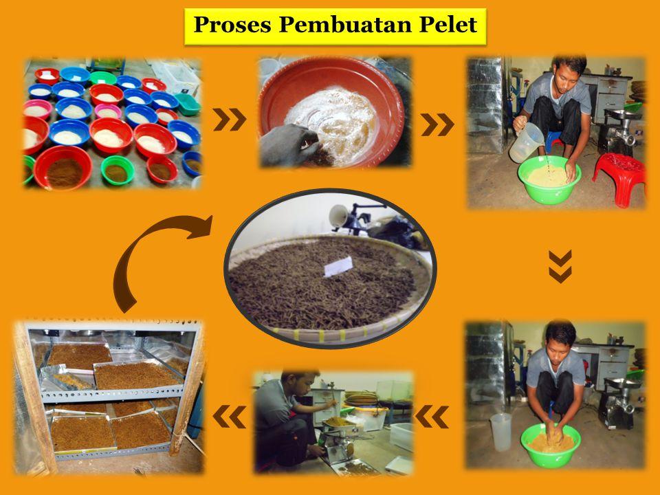 Proses Pembuatan Pelet