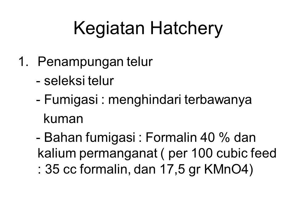 Kegiatan Hatchery Penampungan telur - seleksi telur