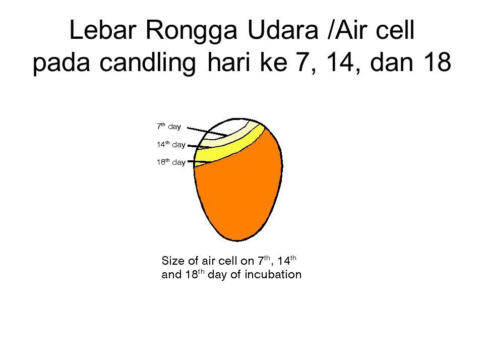 Lebar Rongga Udara /Air cell pada candling hari ke 7, 14, dan 18
