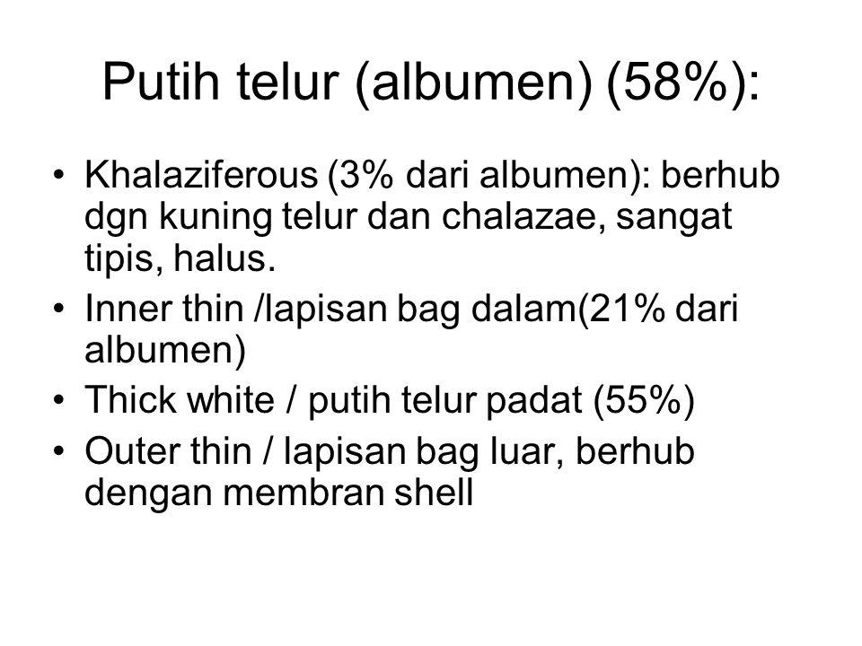 Putih telur (albumen) (58%):