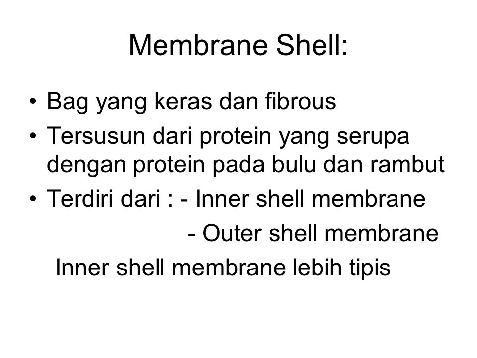 Membrane Shell: Bag yang keras dan fibrous