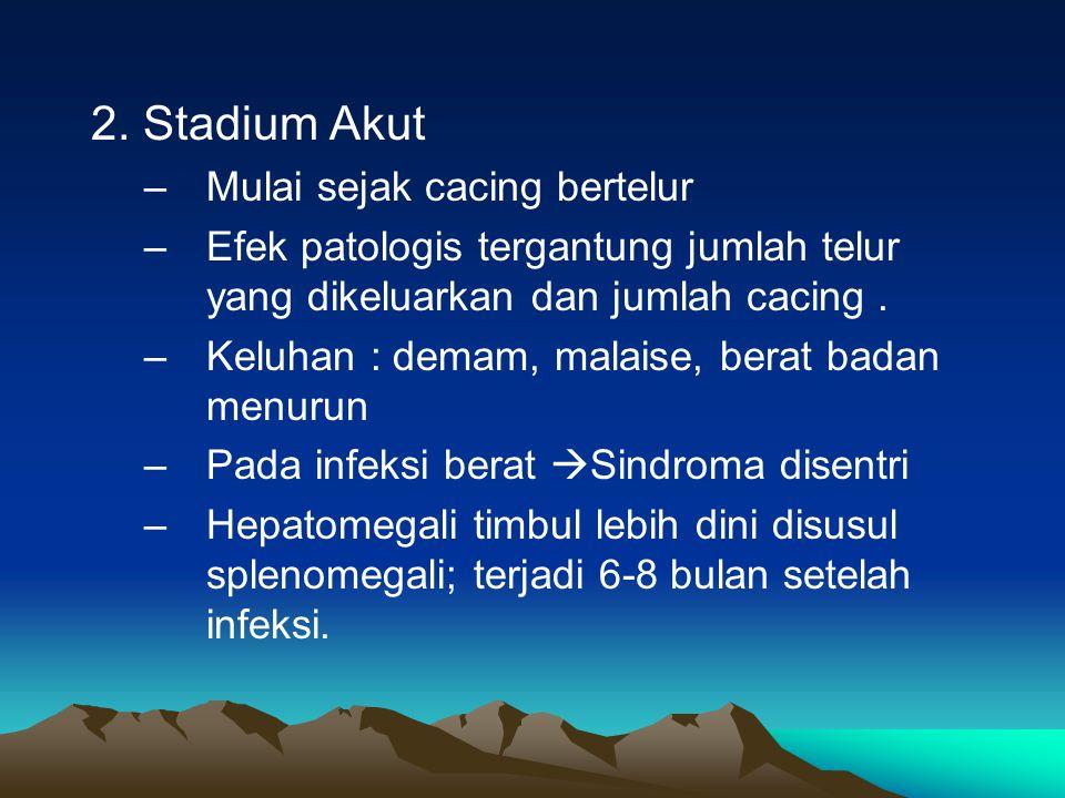 2. Stadium Akut Mulai sejak cacing bertelur