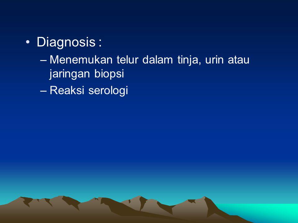 Diagnosis : Menemukan telur dalam tinja, urin atau jaringan biopsi
