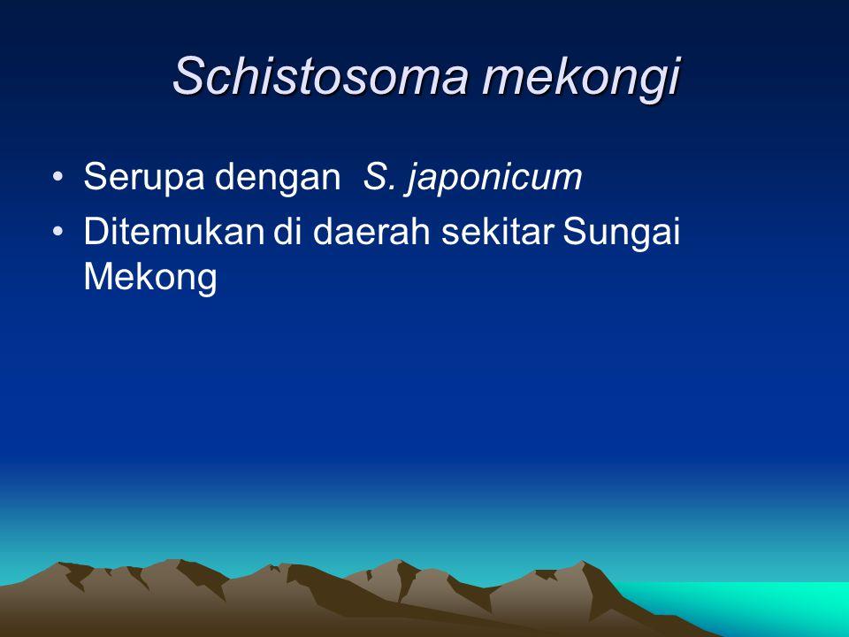 Schistosoma mekongi Serupa dengan S. japonicum