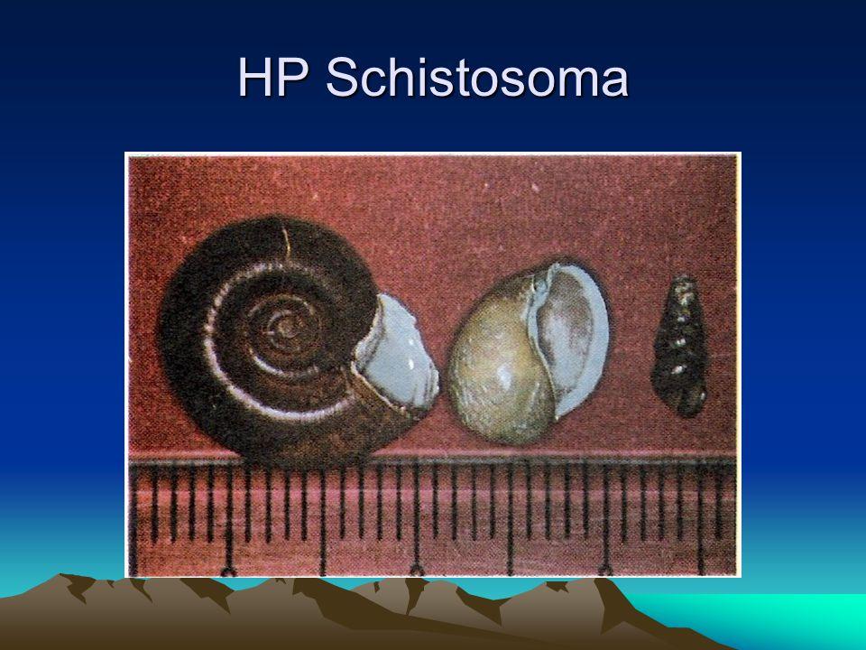 HP Schistosoma