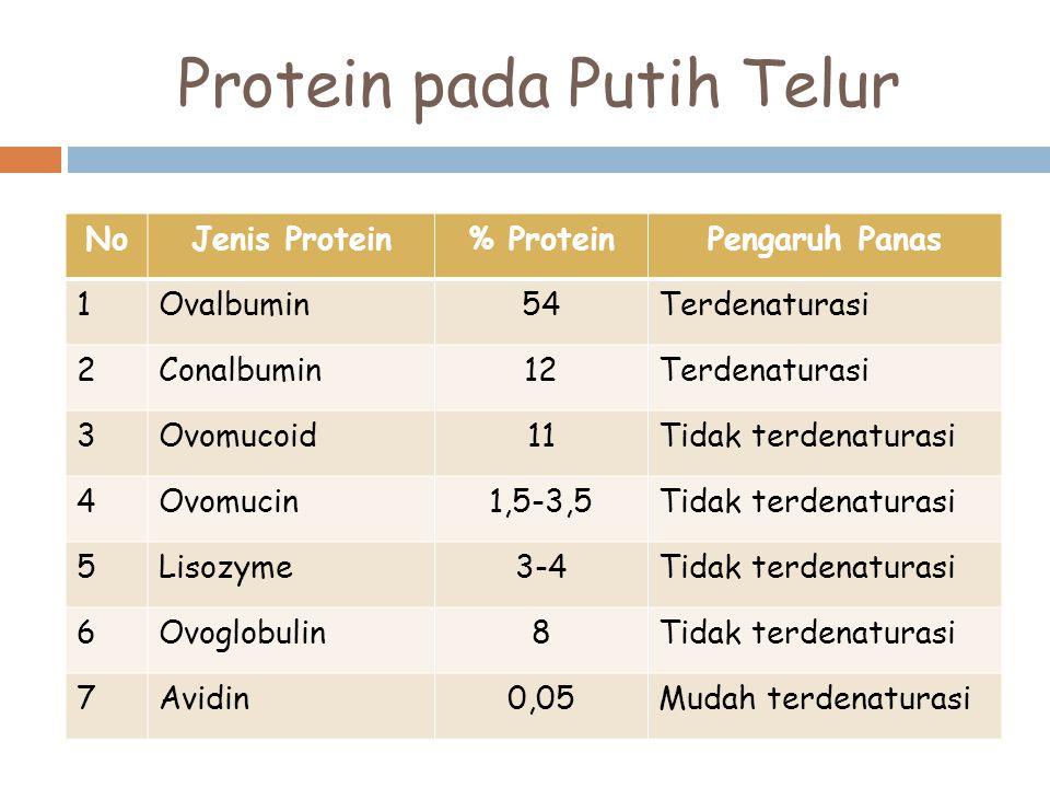 Protein pada Putih Telur