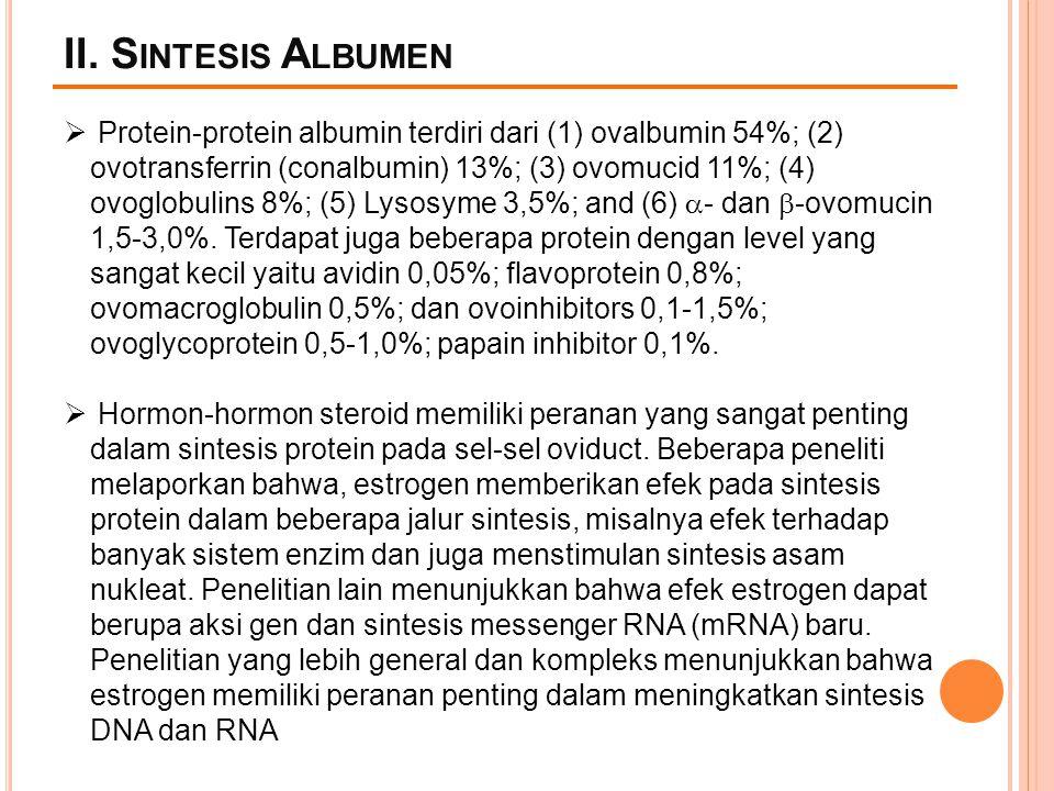 II. Sintesis Albumen