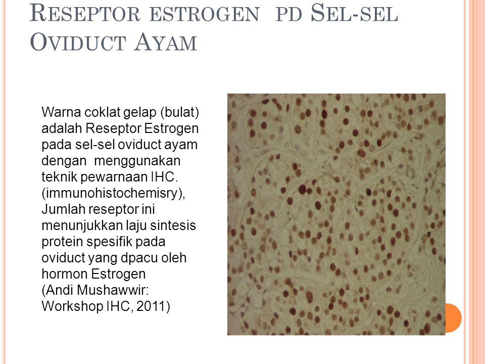 Reseptor estrogen pd Sel-sel Oviduct Ayam