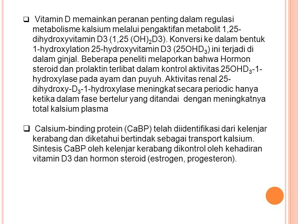 Vitamin D memainkan peranan penting dalam regulasi metabolisme kalsium melalui pengaktifan metabolit 1,25-dihydroxyvitamin D3 (1,25 (OH)2D3). Konversi ke dalam bentuk 1-hydroxylation 25-hydroxyvitamin D3 (25OHD3) ini terjadi di dalam ginjal. Beberapa peneliti melaporkan bahwa Hormon steroid dan prolaktin terlibat dalam kontrol aktivitas 25OHD3-1-hydroxylase pada ayam dan puyuh. Aktivitas renal 25-dihydroxy-D3-1-hydroxylase meningkat secara periodic hanya ketika dalam fase bertelur yang ditandai dengan meningkatnya total kalsium plasma