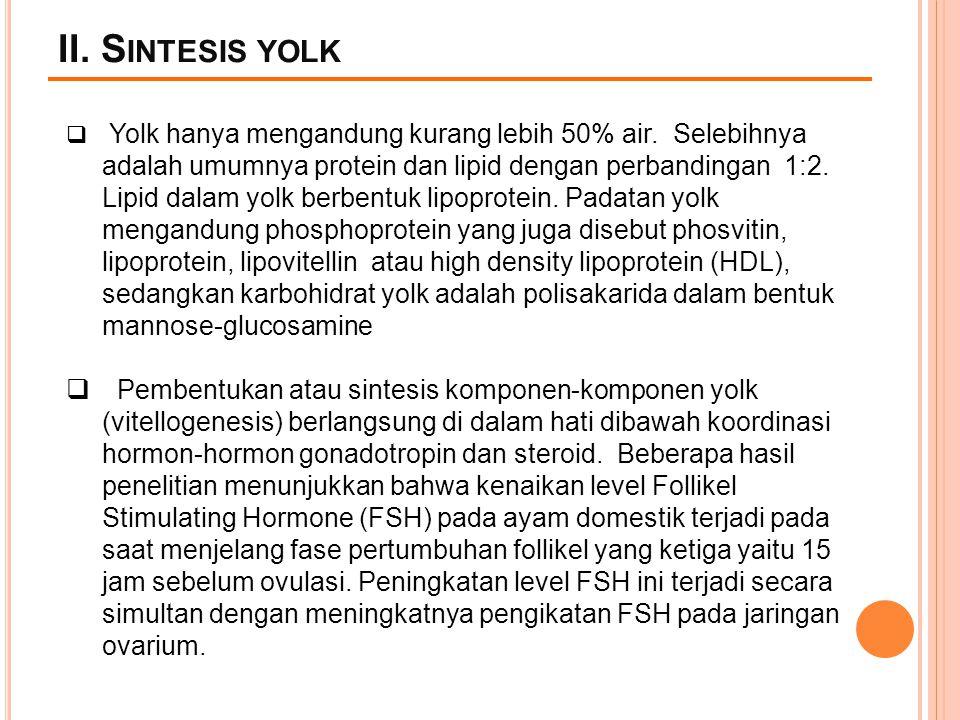 II. Sintesis yolk