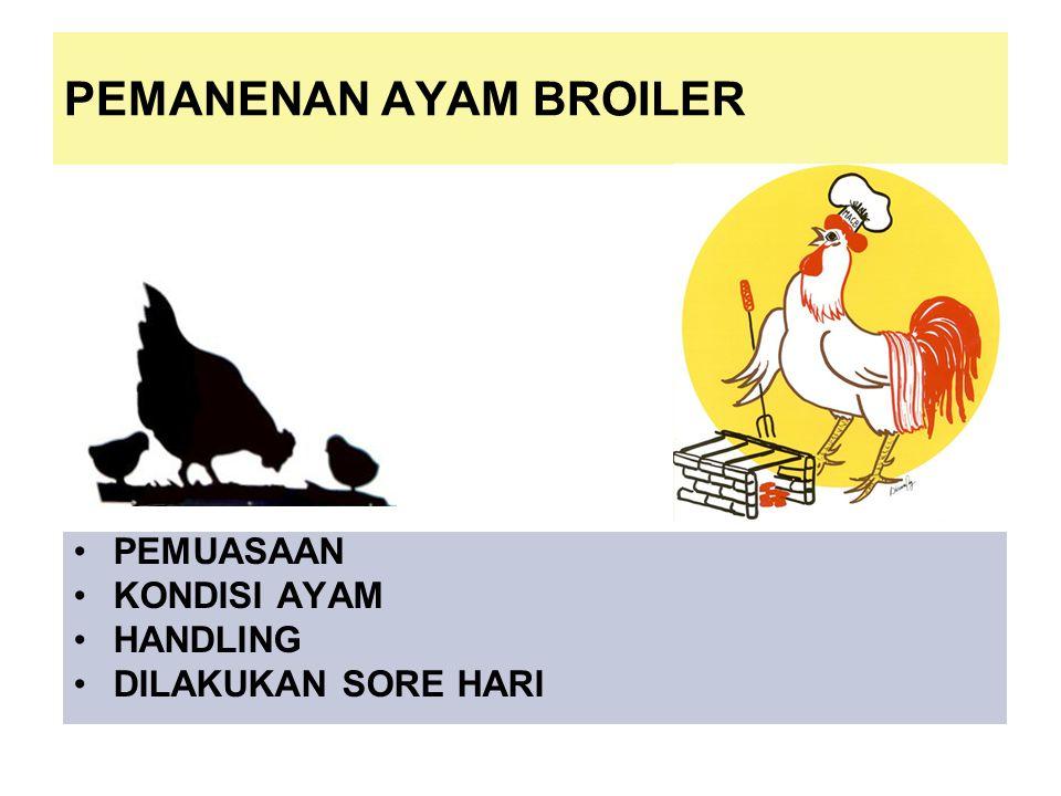 PEMANENAN AYAM BROILER