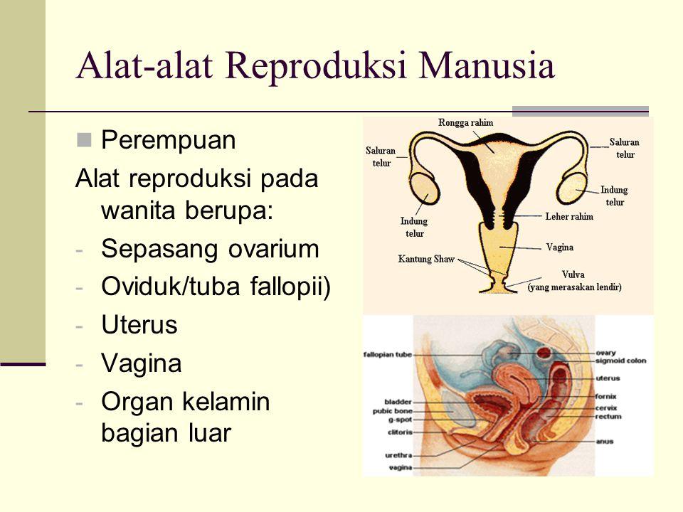 Alat-alat Reproduksi Manusia