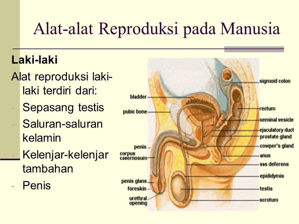 Alat-alat Reproduksi pada Manusia