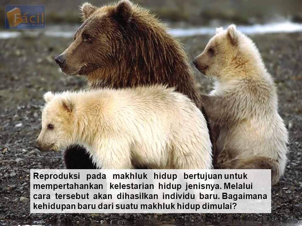 Reproduksi pada makhluk hidup bertujuan untuk mempertahankan kelestarian hidup jenisnya.