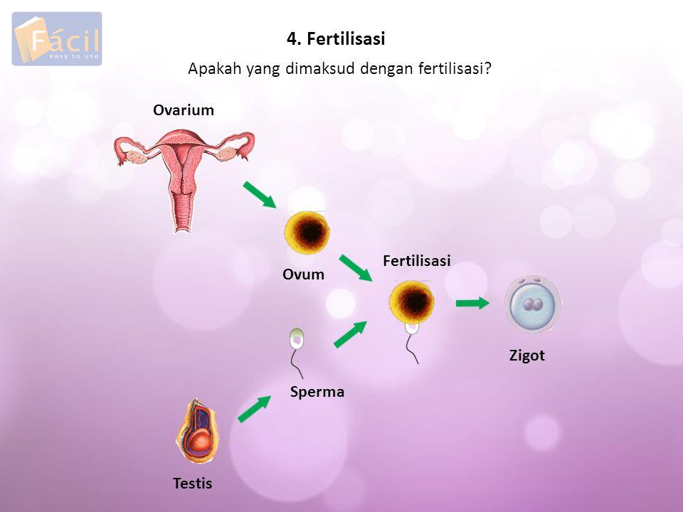 4. Fertilisasi Apakah yang dimaksud dengan fertilisasi Ovarium