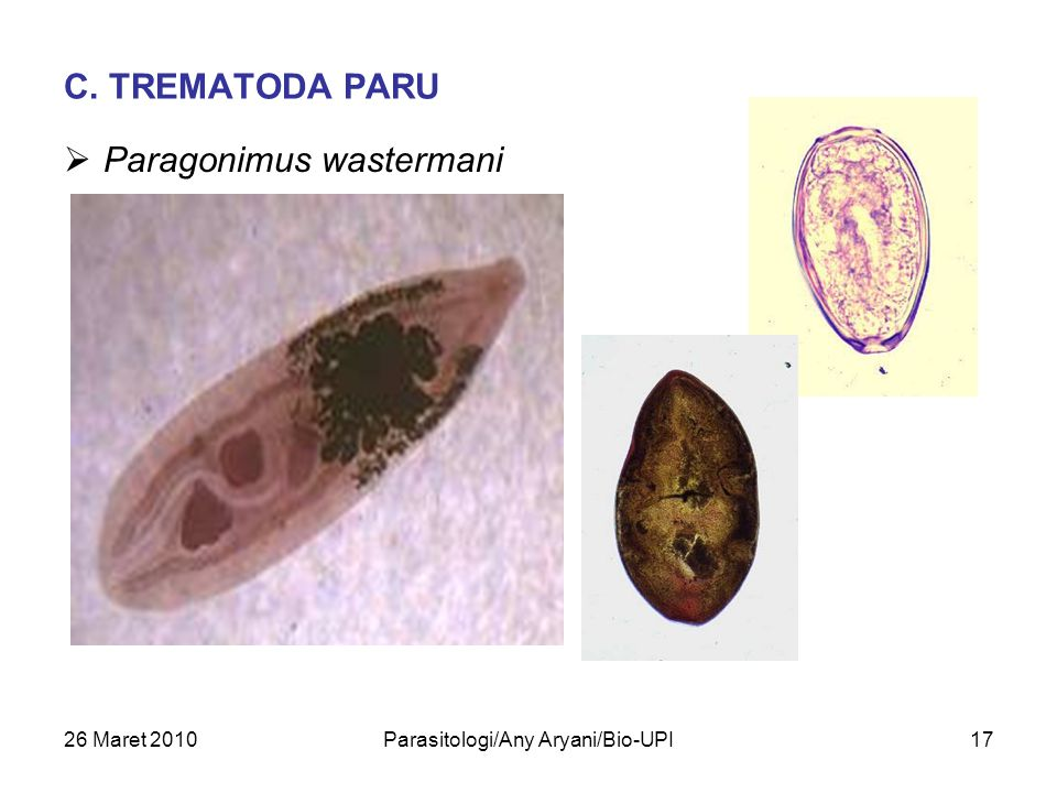 Parasitologi/Any Aryani/Bio-UPI