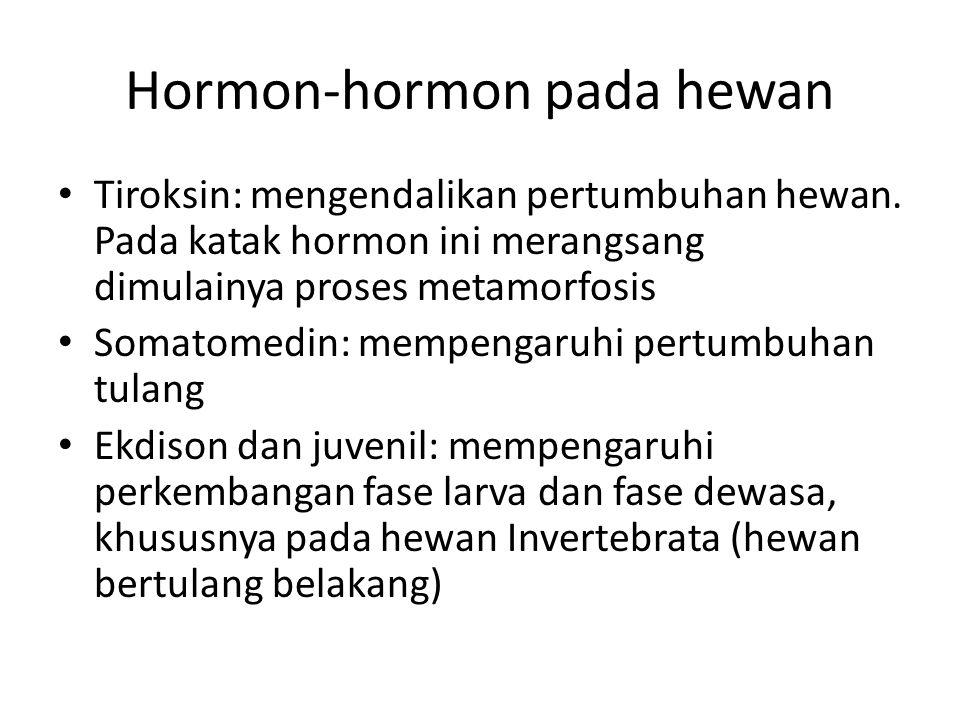 Hormon-hormon pada hewan