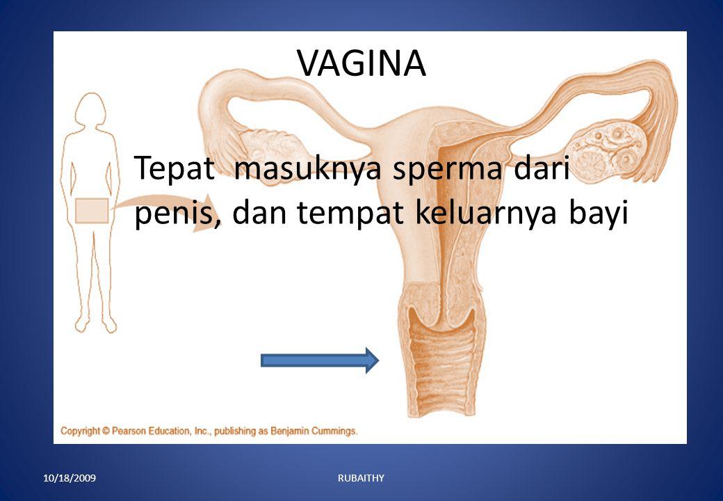 VAGINA Tepat masuknya sperma dari penis, dan tempat keluarnya bayi