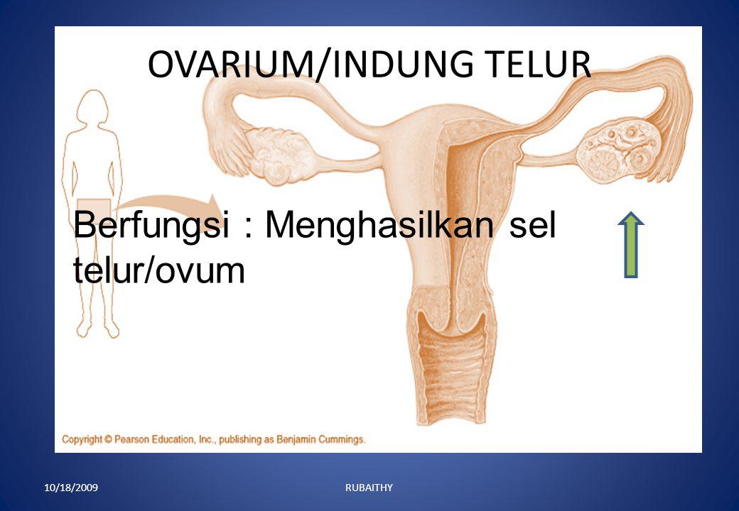 OVARIUM/INDUNG TELUR Berfungsi : Menghasilkan sel telur/ovum