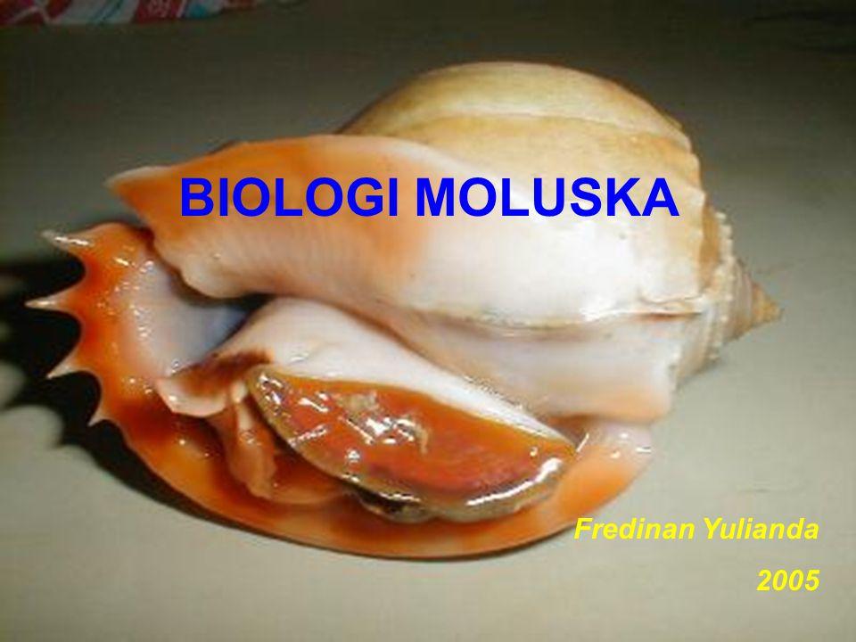 BIOLOGI MOLUSKA Fredinan Yulianda 2005