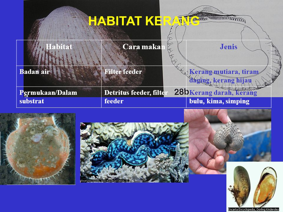 HABITAT KERANG Habitat Cara makan Jenis Badan air Filter feeder