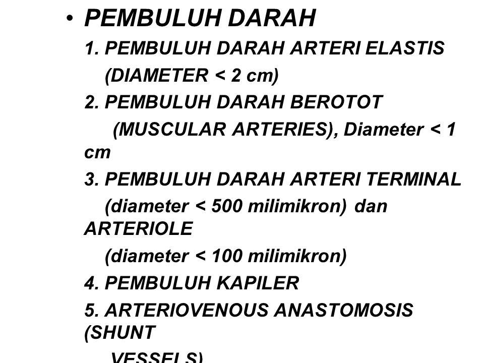 PEMBULUH DARAH 1. PEMBULUH DARAH ARTERI ELASTIS (DIAMETER < 2 cm)
