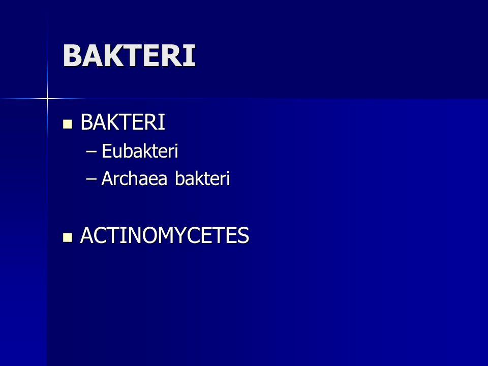 BAKTERI BAKTERI Eubakteri Archaea bakteri ACTINOMYCETES